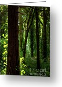 Rural Landscapes Greeting Cards - Green Forest Greeting Card by Carlos Caetano
