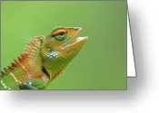 Lizard Greeting Cards - Green Forest Lizard Greeting Card by Saranga Deva De Alwis