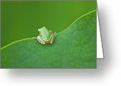 Green Day Greeting Cards - Green Frog Greeting Card by Susanne Bund