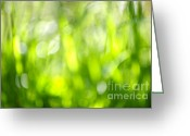 Grasses Greeting Cards - Green grass in sunshine Greeting Card by Elena Elisseeva
