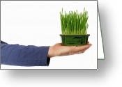 Holding Flower Greeting Cards - Green Grass on hand Greeting Card by Sami Sarkis