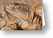Lizard Greeting Cards - Green Iguana Greeting Card by Charles Dobbs