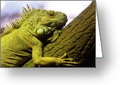 Iguana Greeting Cards - Green Iguana Of Nature Park Greeting Card by Victor Estevez