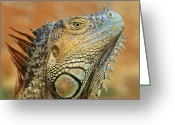 Lizard Greeting Cards - Green Iguana Greeting Card by Tony Beck