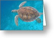 Sea Turtle Greeting Cards - Green In Blue Greeting Card by Kimberly Mohlenhoff