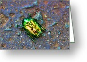 Figs Greeting Cards - Green JuneBug Greeting Card by Mariola Bitner