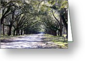 Tree-lined Greeting Cards - Green Lane Greeting Card by Carol Groenen