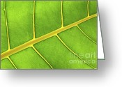 Vivid Greeting Cards - Green leaf close up Greeting Card by Elena Elisseeva