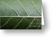 Slr Greeting Cards - Green Leaf Geometry Greeting Card by Ryan Kelly