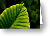Palm Leaf Greeting Cards - Green Leaf Greeting Card by Lyle  Huisken