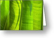 Tree Lines Greeting Cards - Green Leaf Greeting Card by Setsiri Silapasuwanchai