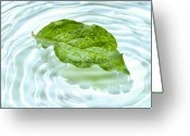 Surface Greeting Cards - Green leaf with water reflection Greeting Card by Sandra Cunningham