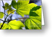 Back-light Greeting Cards - Green Leaves Greeting Card by Carlos Caetano