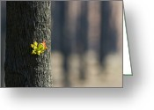 Devastation Greeting Cards - Green Leaves Sprout From Eucalyptus Greeting Card by Jason Edwards