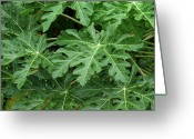 Papaya Greeting Cards - Green Leaves Greeting Card by Thomas Walsh