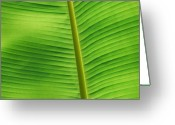 Macro Greeting Cards - Green Lines Greeting Card by Kimberly Gonzales
