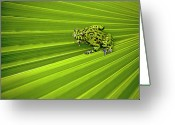 Amphibian Greeting Cards - Green Lines Of Nature Greeting Card by Jeff R Clow