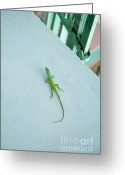 West Indies Greeting Cards - Green lizard climbing a blue wall Greeting Card by Sami Sarkis