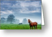 Stallion Greeting Cards - Green Morn Greeting Card by Evgeni Dinev