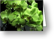 Lime Photo Greeting Cards - Green Orchids Greeting Card by Marsha Heiken