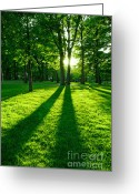 Backlit Greeting Cards - Green park Greeting Card by Elena Elisseeva