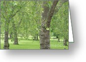 Park Benches Greeting Cards - Green Park London Greeting Card by Ann Horn