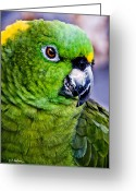 Ocularperceptions Greeting Cards - Green Parrot Greeting Card by Christopher Holmes