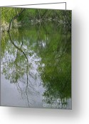 Nature Greeting Cards - Green Peace - Trees Reflection Greeting Card by Ben and Raisa Gertsberg