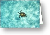 Pacific Islands Greeting Cards - Green Sea Turtle In Under Water Greeting Card by M.M. Sweet