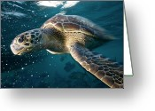 Bubble Greeting Cards - Green Sea Turtle Greeting Card by Kaido Haagen