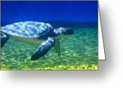 Longevity Greeting Cards - Green Sea Turtle Greeting Card by Karon Melillo DeVega