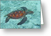 French Polynesia Greeting Cards - Green Sea Turtle Greeting Card by Mako photo
