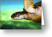 Swimming Photo Greeting Cards - Green Sea Turtle Greeting Card by Marilyn Hunt