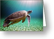 Middle East Greeting Cards - Green Sea Turtle Greeting Card by Stephen Ennis Photography