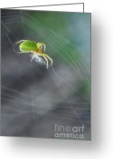 Spider Man Greeting Cards - Green Spider 1.0 Greeting Card by Yhun Suarez