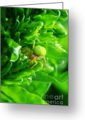 Spider Man Greeting Cards - Green Spider 2.0 Greeting Card by Yhun Suarez