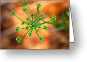 Plant Greeting Cards - Green Starburst Greeting Card by Kimberly Gonzales