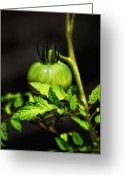 Green Tomato Greeting Cards - Green Tomato Greeting Card by Bill Cannon