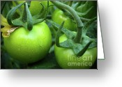 Green Tomato Greeting Cards - Green Tomatoes No.1 Greeting Card by Kamil Swiatek