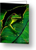 Amphibians Greeting Cards - Green Tree Frog and Leaf Greeting Card by Nick Gustafson