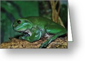 Moist Greeting Cards - Green Tree Frog with a Smile Greeting Card by Kaye Menner