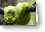 Green Day Greeting Cards - Green Tree Python Greeting Card by Andy Wanderlust