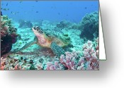 Animal Themes Greeting Cards - Green Turtle Greeting Card by Wendy A. Capili