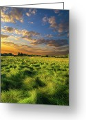 Natural Light Greeting Cards - Green Waves Greeting Card by Phil Koch
