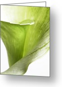 Modern Framed Prints Greeting Cards - Green White Flower Leaves Abstract ll - Macro Flowers Fine Art Photography Greeting Card by Artecco Fine Art Photography - Photograph by Nadja Drieling