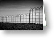 Greenhouse Greeting Cards - Greenhouse Greeting Card by David Bowman