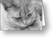 Whiskers Greeting Cards - Greta in Black and White Greeting Card by Glennis Siverson