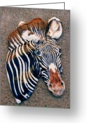 Wildlife Art Ceramics Greeting Cards - Grevy Greeting Card by Dy Witt
