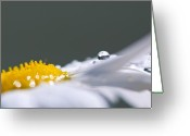 Custom Art Photo Greeting Cards - Grey and Yellow Daisy Greeting Card by Lisa Knechtel