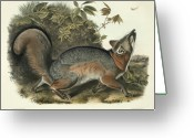 Litho Greeting Cards - Grey Fox Greeting Card by John James Audubon